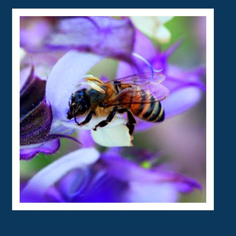 Atrakcja w Open Garden sa np. pszczoly