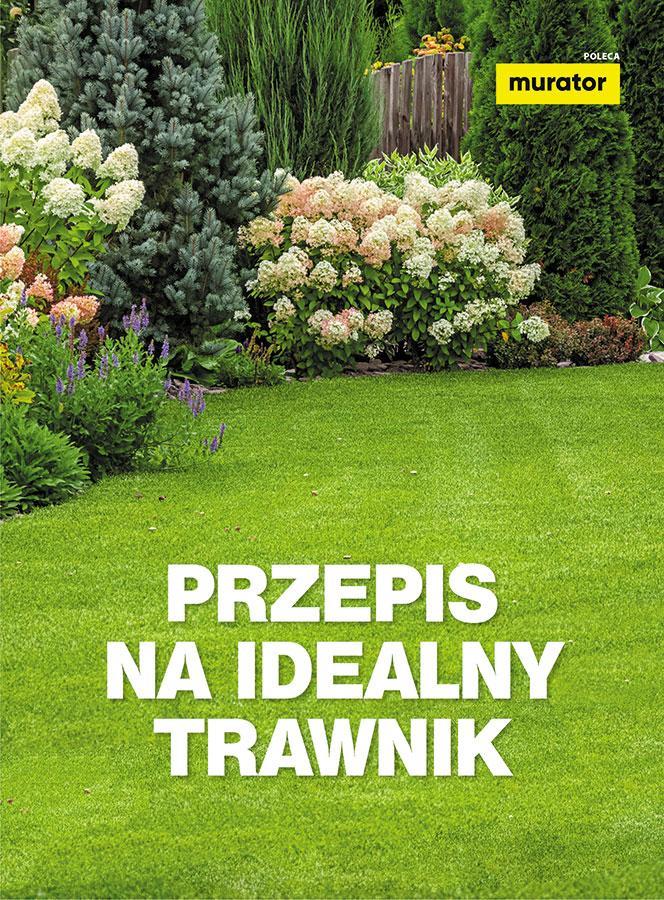 Przepis na idealny trawnik